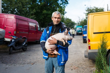 campesino: Kamianka, Ukraine - September 29 2016: Native ukrainian peasant holds a cute piglet in his hands
