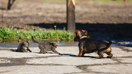 시골에서 새끼 고양이 개를 대결