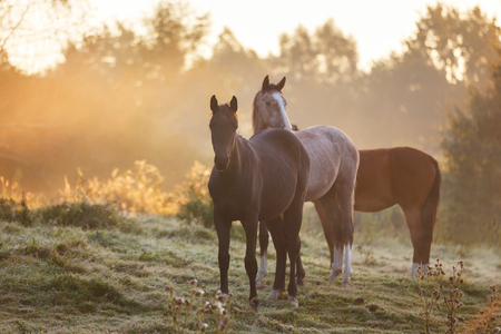 Herd of horses on the meadow in morning sunlight