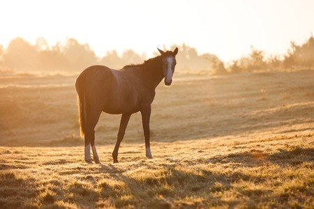 Horse on the meadow in morning sunlight