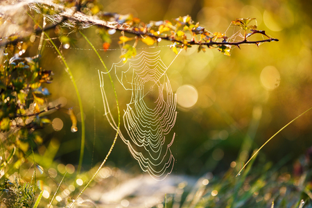 Cobweb in the morning sunlight in the fall Stock Photo