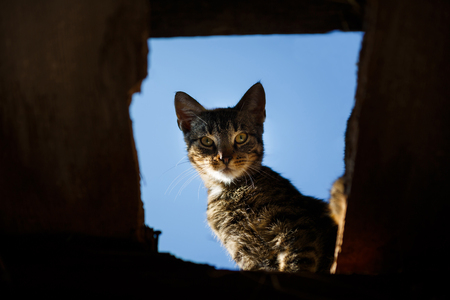 The wild cat is looking through a hole in a barn