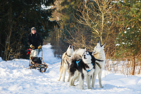 The man with dog sled in the winter forest Stock Photo
