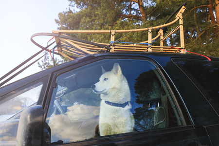 Dog sled in the car, view through glass
