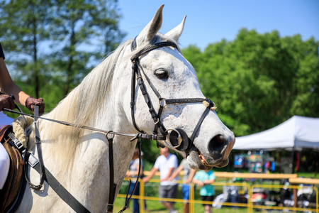 The horse on an equestrian event Фото со стока