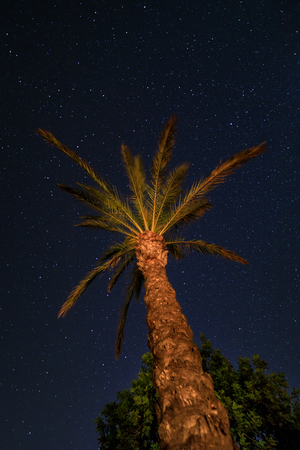 Palm tree on the background of the starry sky