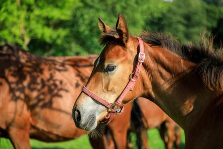 Portrait of the foal in summer