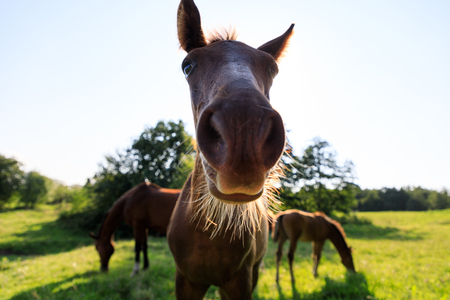 Funny portrait of the foal in summer Stock Photo - 107661597