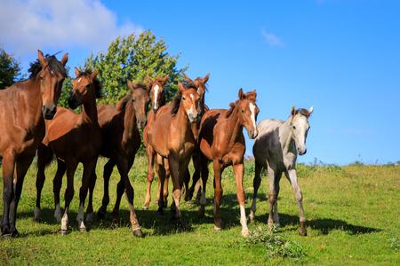 Herd of foals on the pasture Stock Photo - 109574319