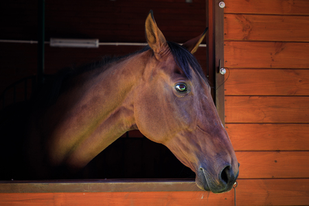 Portrait of the horse in a stall Standard-Bild - 109574320