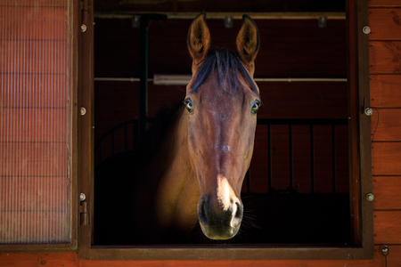 Portrait of the horse in a stall Standard-Bild - 109574321