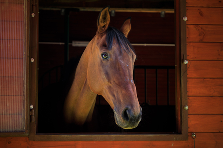 Portrait of the horse in a stall Standard-Bild - 109574322