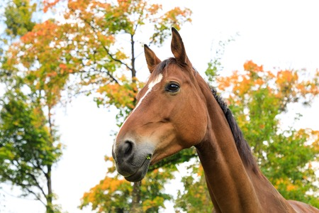 Portrait of the brown foal in autumn Stock Photo