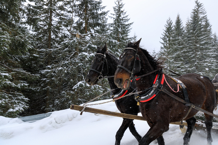 Horse carriage in mountains in winter