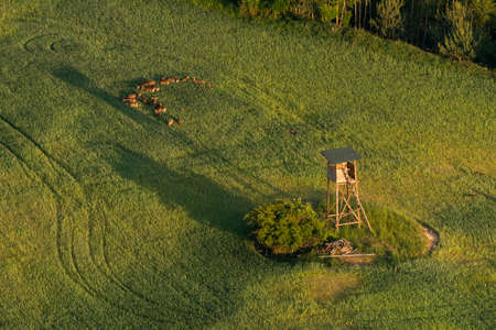 hunters tower: Hunter hide in field