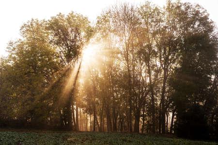 Morning sun rays in a misty forest Reklamní fotografie - 136949964