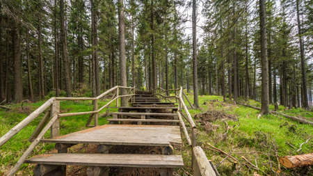 Wooden trail leading through the Boubin forest in Sumava