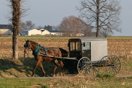 An Amish horse buggy drawn by a beautiful brown horse, Lancaster County, PA