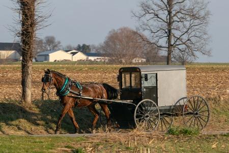Un buggy cheval Amish tiré par un beau cheval brun, comté de Lancaster, PA