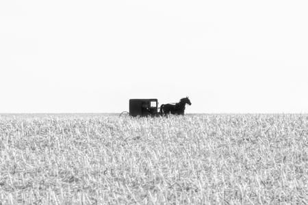 An Amish horse-drawn buggy in a harvested field of corn in black and white, Lancaster County, PA