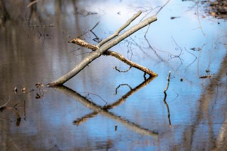 Due rami caduti intrecciati formano la lettera X e si riflettono nelle onde di uno stagno calmo della foresta