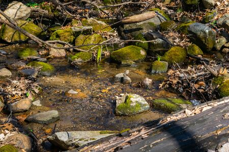 Moss-covered rocks, and bare branches overhanging a small creek with clear cool water 版權商用圖片
