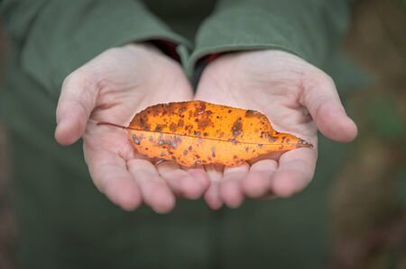 Close-up of female hands holding a colorful autumn leaf