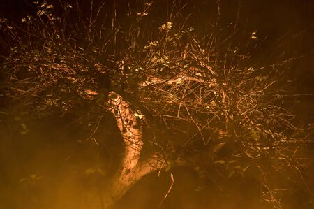 A gnarly, mysterious looking tree on a foggy moonless night in Upstate New York