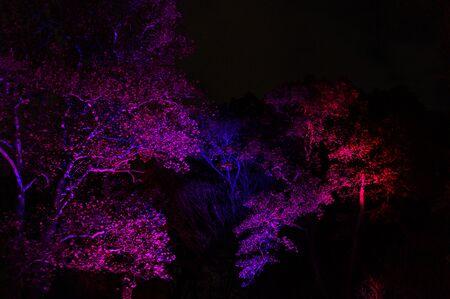 Árboles y hojas iluminadas en diferentes colores, contra el oscuro cielo nocturno Foto de archivo