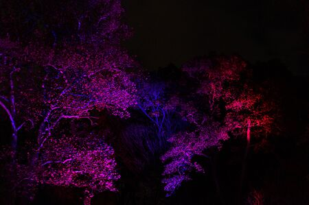 Trees and leaves illuminated in different colors, against the dark nighttime sky Standard-Bild