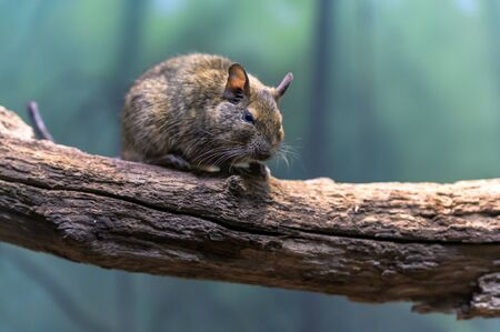 A small rodent sitting on a branch
