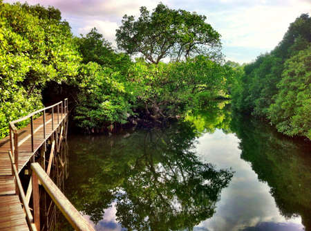 mangroves: Mangroves Bali