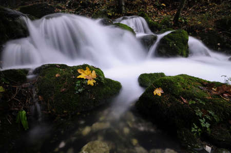 bourn: Mossy brook in a deep forest in autumn Stock Photo