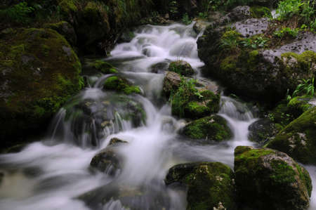 bourn: Mossy brook in a deep forest