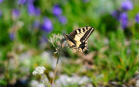 Little butterfly on a flower photo