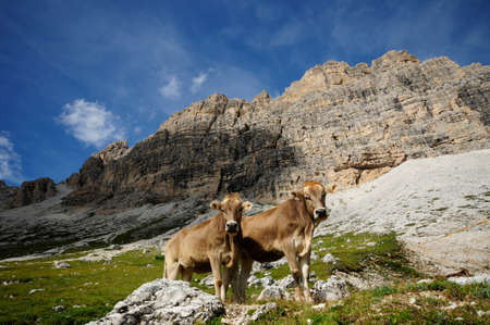 Free animals in the dolomites photo