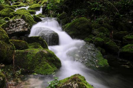 bourn: Mossy stream in autumn Stock Photo