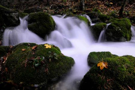 bourn: Mossy stream in autumn