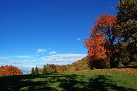Mountain landscape with lawn, trees, blue sky and autumn colors photo