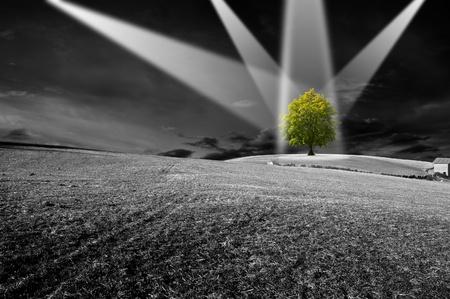 desarrollo sustentable: Paisaje en blanco y negro con el �rbol verde - el concepto de ecolog�a Foto de archivo