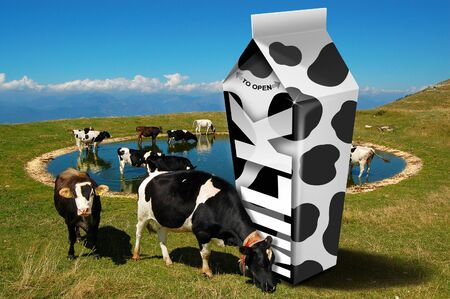 grazing: White carton milk with black spots and cows grazing in the mountains