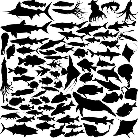74 Vector Silhouetten van vis, vis en zeedieren op wit wordt geïsoleerd Vector Illustratie