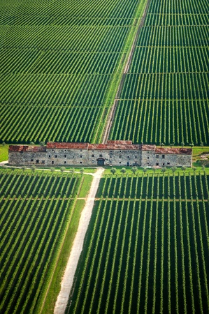 vineyard plain: Fields of vines and old county house in Veneto Italy Editorial