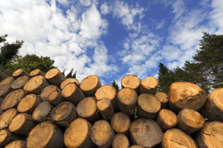 Cut timber in a pile, against a blue sky with clouds and trees Archivio Fotografico