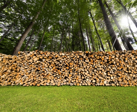 Dry chopped firewood logs in a pile in a green forest photo