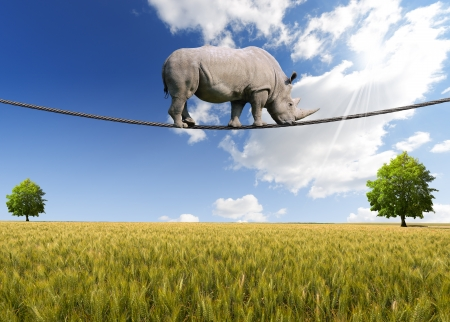 Great white rhino walking on steel cable, blue sky, trees and wheat field on background