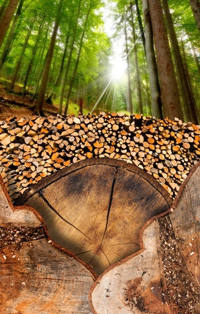 Trunk sections and dry chopped firewood logs in a pile in the foreground and green forest in the background photo