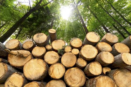 Baumstämmen geschnitten und in den Vordergrund gestapelt, grünen Wald im Hintergrund mit Sonnenstrahlen
