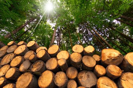 Troncos de árboles cortados y apilados en el primer plano, bosque verde en el fondo con los rayos del sol Foto de archivo