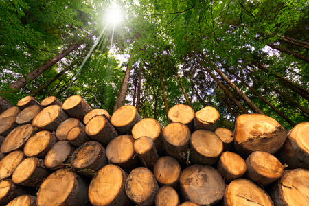 Troncs d'arbres coupés et empilés dans le premier plan, vert forêt en arrière-plan avec des rayons de soleil Banque d'images - 34191609